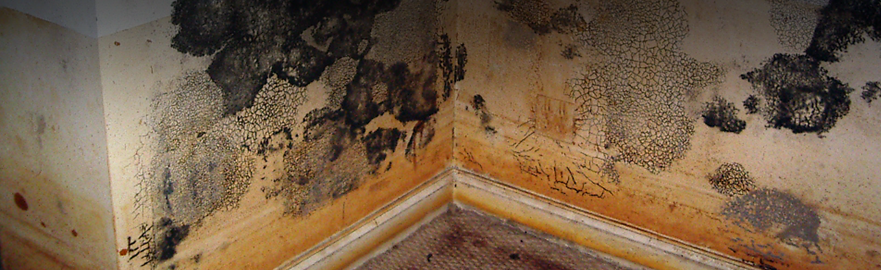 Mold - Florida Home Inspections provided by US Inspect - Serving Cental Florida